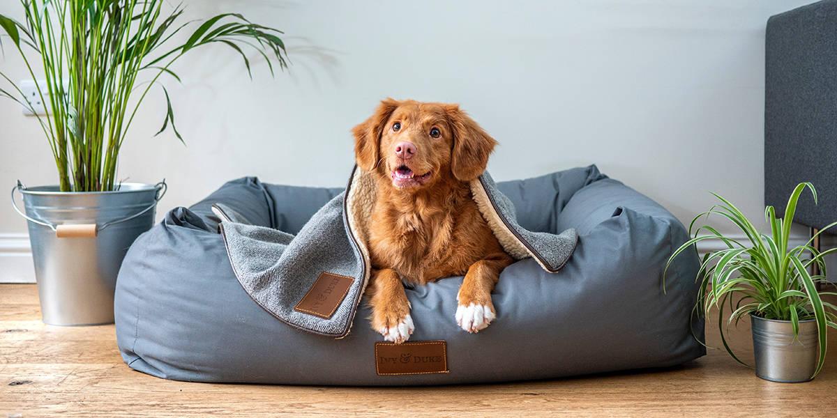 Melhor cama para cachorro