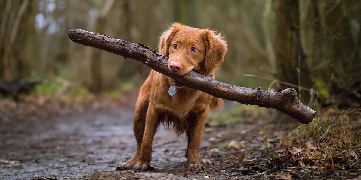 Melhores Coleiras para Cachorro