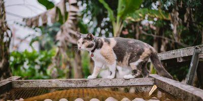 As 7 Melhores Coleiras para Gatos em 2020