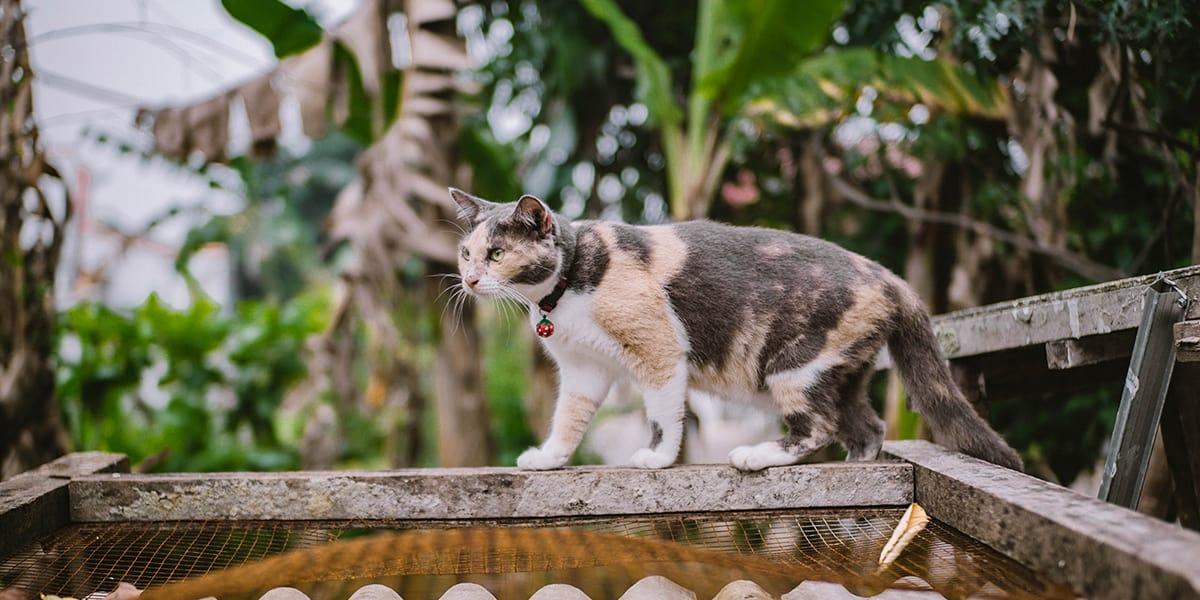 Melhores Coleiras para Gatos
