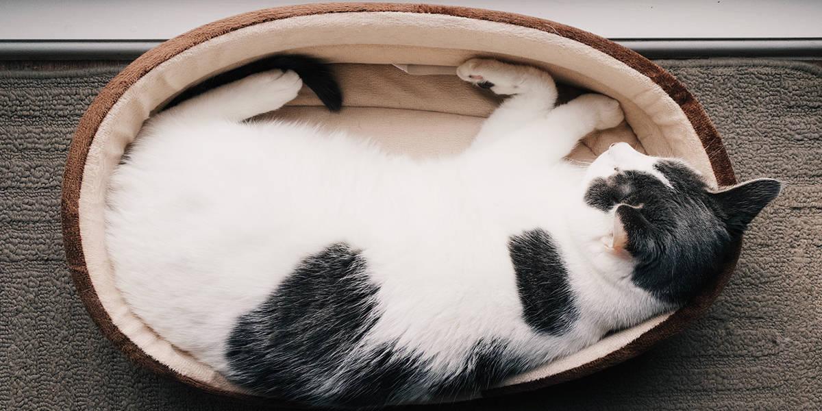 melhores camas para gatos