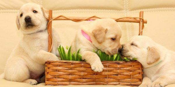 As 9 Melhores Rações para Cachorros Filhotes de 2021