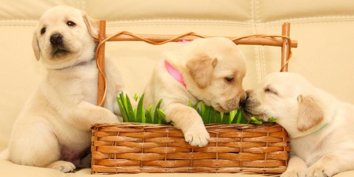 Melhores Rações para Cachorros Filhotes