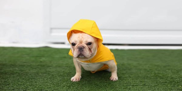 Melhores Capas de Chuva para Cachorros