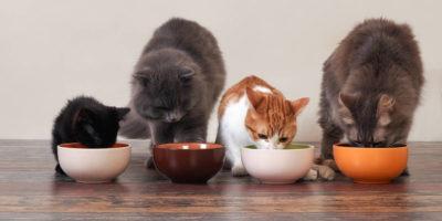 Melhores Comedouros para Gatos