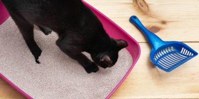 Melhores Areias Higiênicas para Gatos