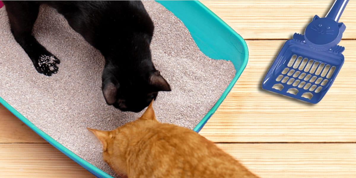Melhores Caixas de Areia para Gatos