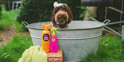 Melhores Shampoos para Cachorro