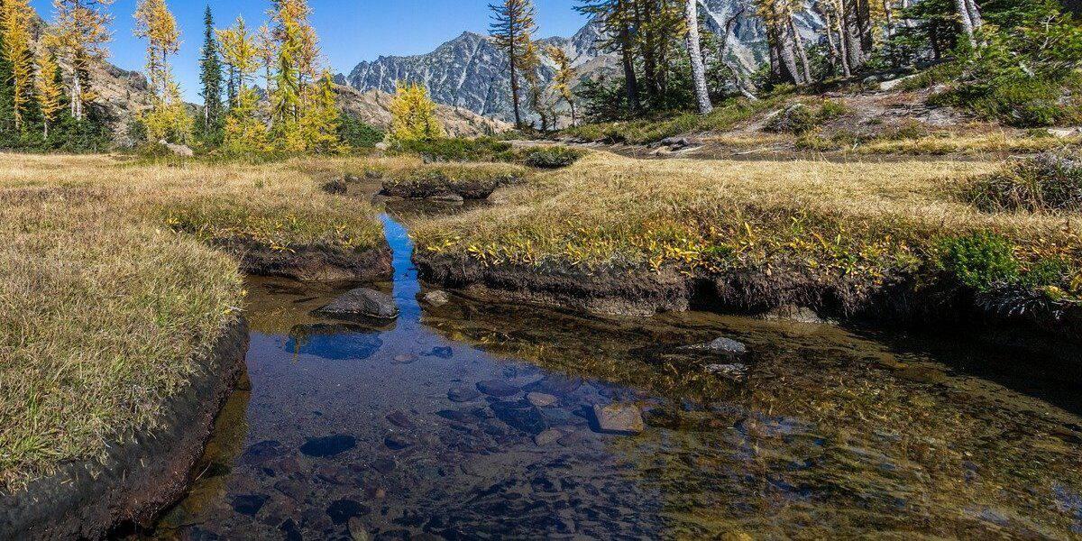 Por mais que pareça limpa, a água na natureza pode estar cheia de seres nocivos.