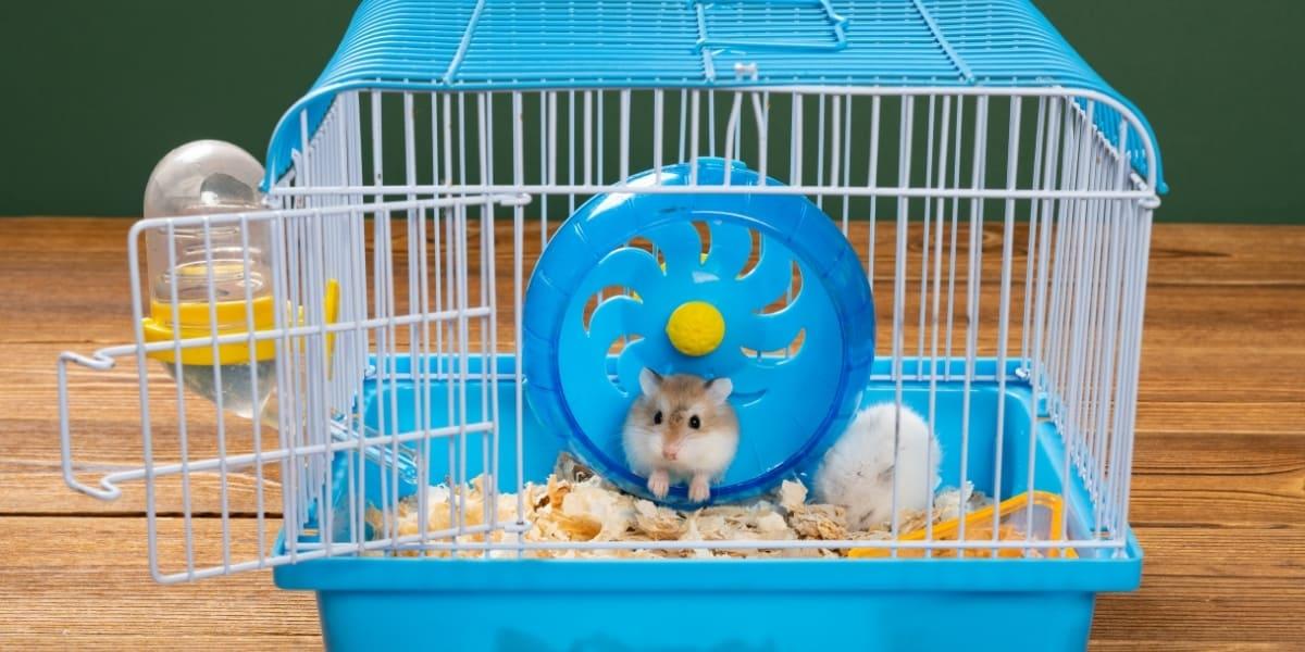 Melhores Gaiolas para Hamster