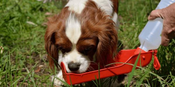 Melhores Bebedouros para Cachorro