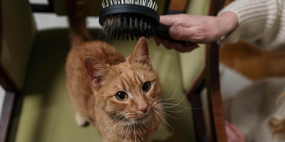 Melhores Escovas para Gato