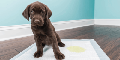Melhores Tapetes Higiênicos para Cachorro
