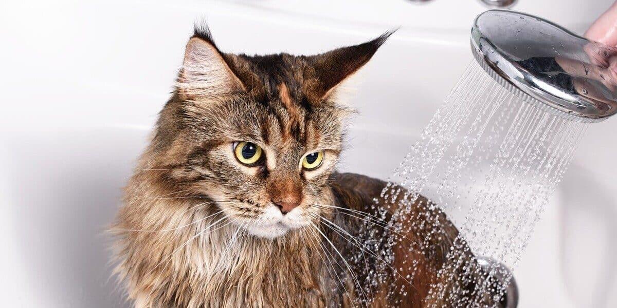 Melhores Shampoos Para Gato